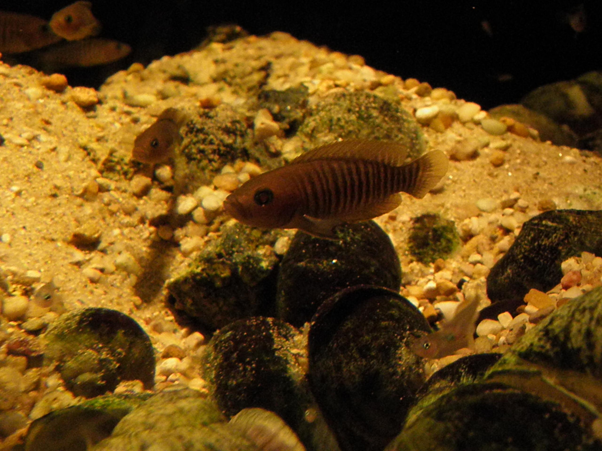Aquariumservice aquariumgestaltung aquarium reinigen for Aquarium reinigen
